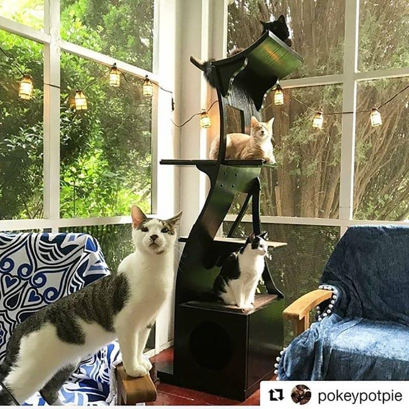 Lotus Cat Tower Espresso