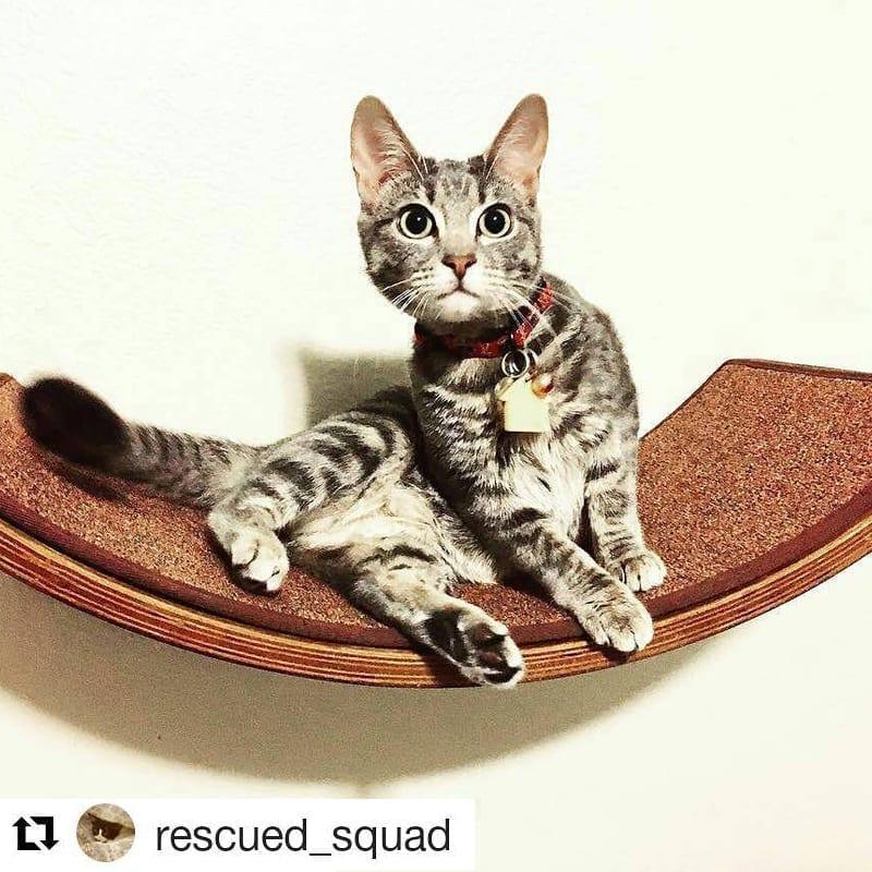 Lotus Leaf Cat Shelf Mahogany