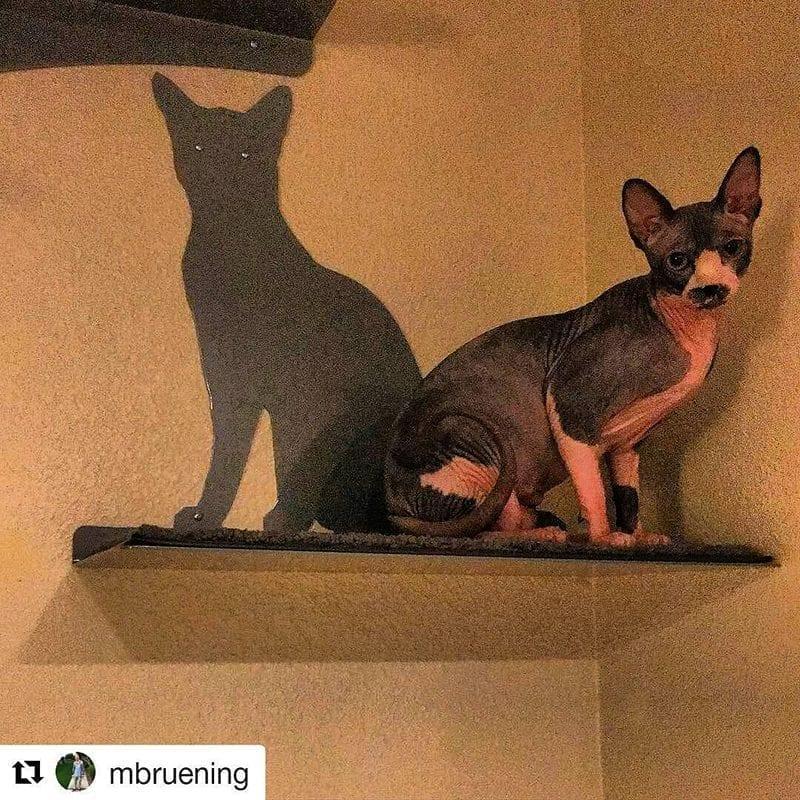 Cat Silhouette Cat Shelves Titanium