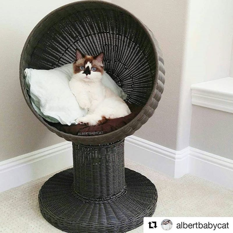 Kitty Ball Cat Bed Espresso