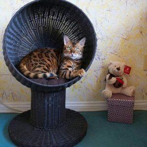 Kitty Ball Cat Bed Espresso