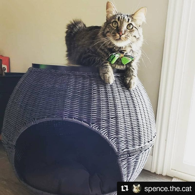 The Igloo Cat Bed Espresso
