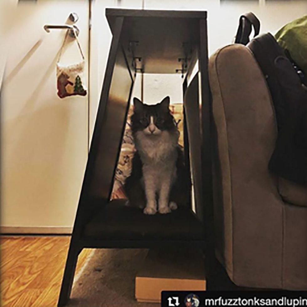 A-Frame Cat Bed Espresso
