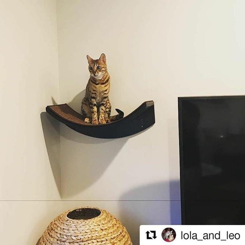 Lotus Leaf Cat Shelf Espresso