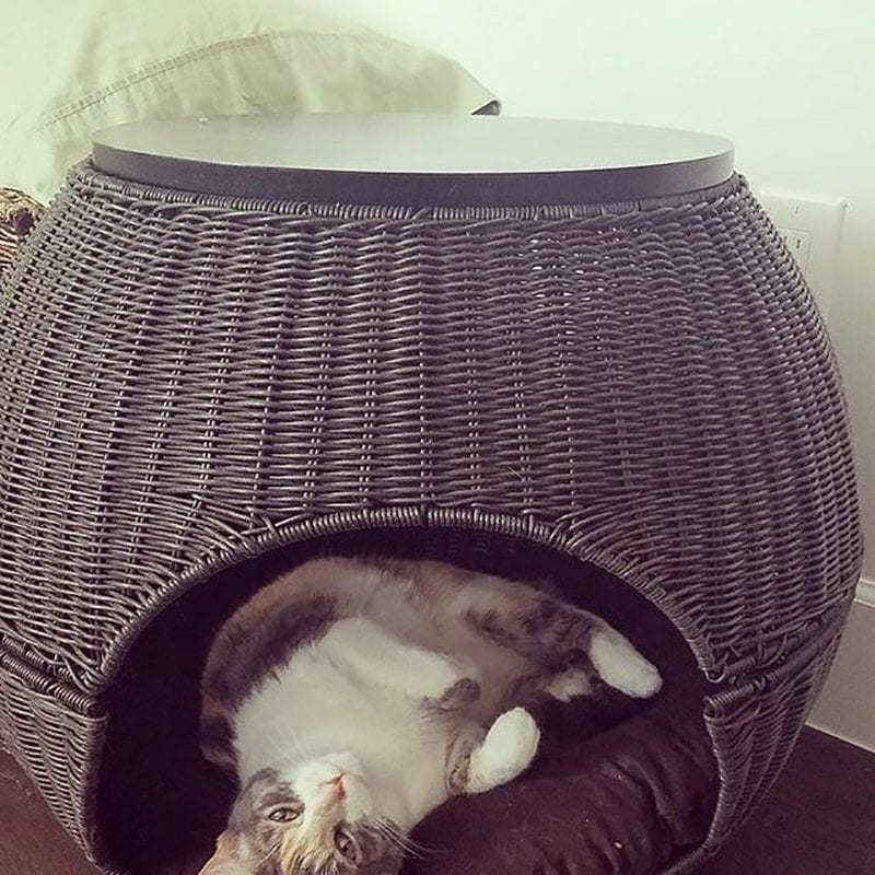 The Igloo Cat Bed Espresso