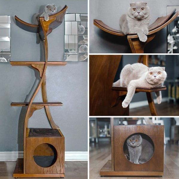 cats on the shelves-13