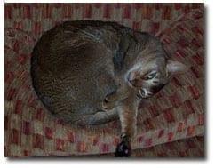 The Refined Feline cat: Kerpal