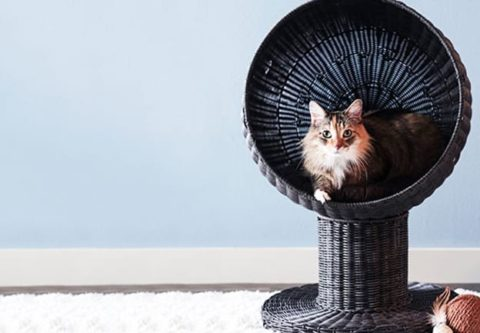 Cat Beds: Wicker, Elevated, Raised & More