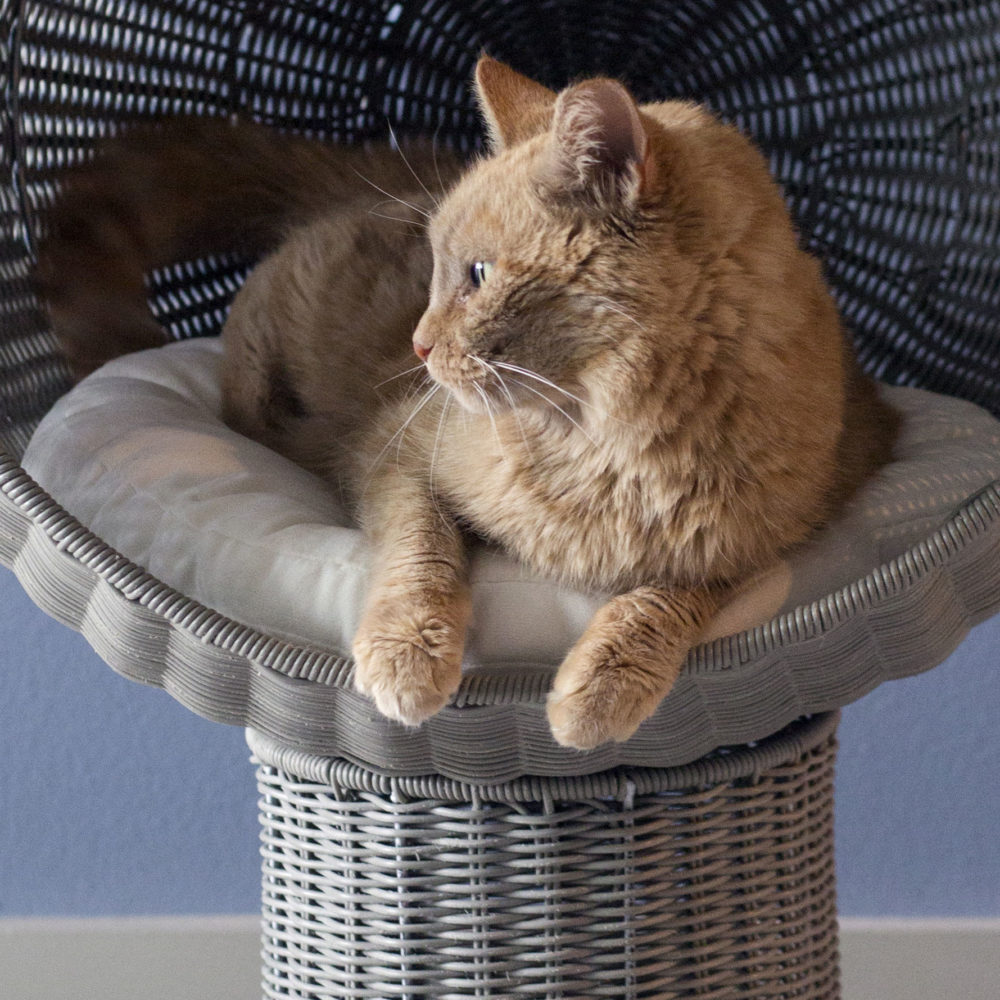 kitty-ball-bed-cushion