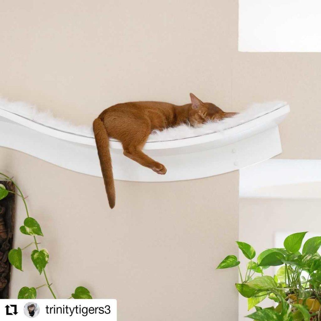 cat on lotus branch cat shelf @Trinitytigers3