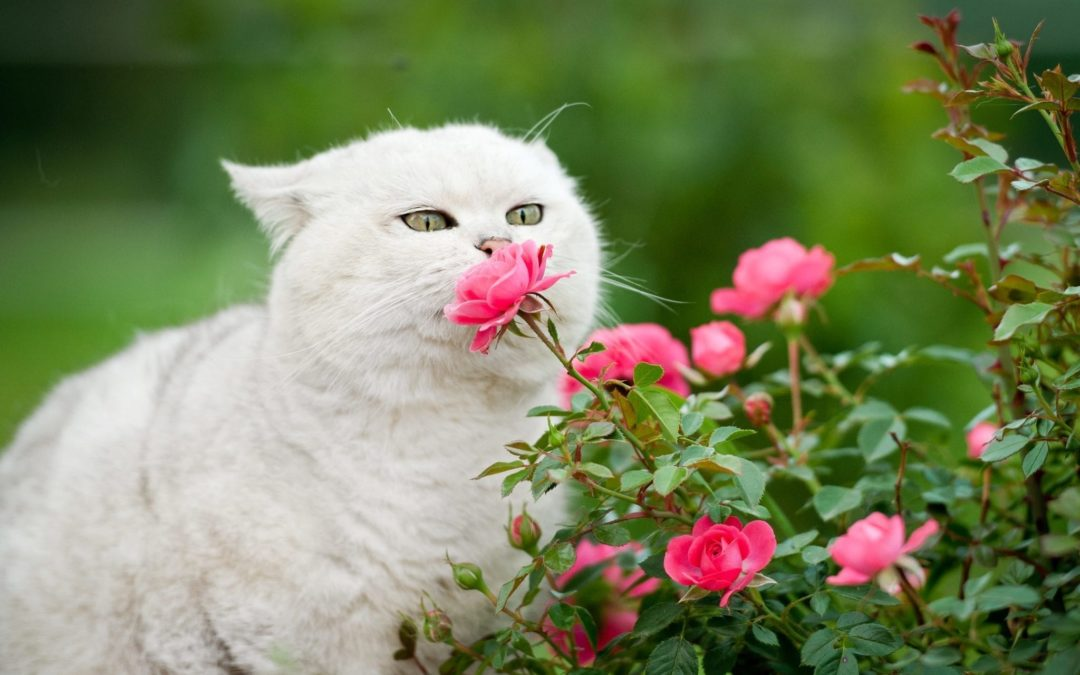 Spring is Coming But Not All Plants Are Safe! Here's a List of Plants Poisonous to Cats