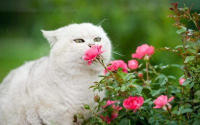 Spring is coming! Keep your cat away from these toxic plants!