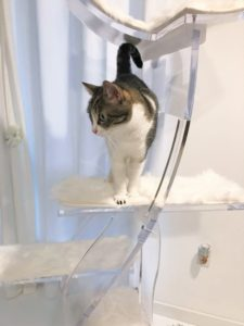 THE FIRST $5,000 CRYSTAL CLEAR LOTUS CAT TOWER HAS A HOME
