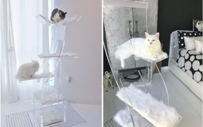 The first $5,000 Crystal Clear Lotus Cat Tower Has A Home!