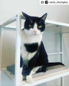 metropolitan cat condo