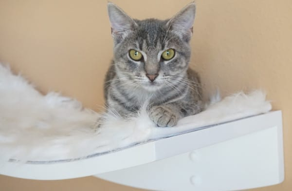 Thinking about fostering a cat? Here is some helpful info!