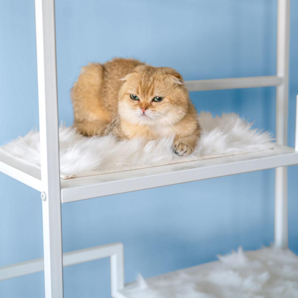 White Cushion For Metropolitan Cat Condo