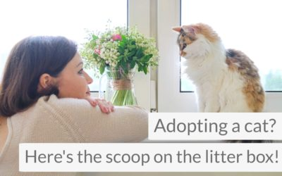 Adopting a Cat? Here's the Scoop on the Cat Litter Box!