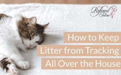 How to Keep Cat Litter From Tracking All Over the House