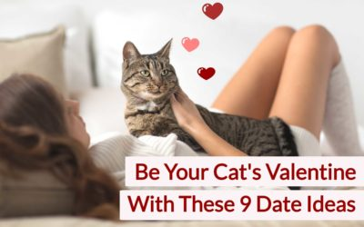 Be Your Cat's Valentine With These 9 Date Ideas