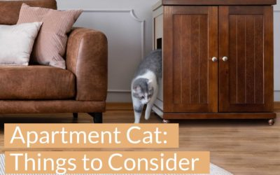 Things to Consider Before Getting An Apartment Cat
