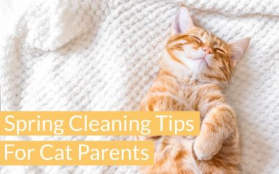 Spring Cleaning Tips for Cat Parents
