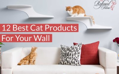 12 Best Cat Products for Your Wall- A Review