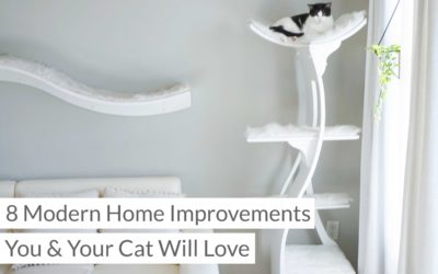8 Modern Home Improvements You and Your Cat Will Love