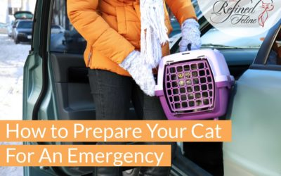 How To Prepare Your Cat For An Emergency