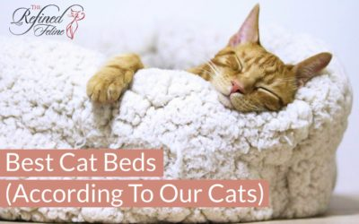 Best Cat Beds (A Review From Our Cats)