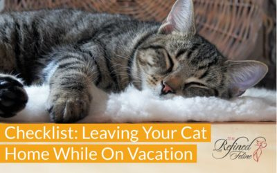 Checklist For Leaving Your Cat Home While On Vacation