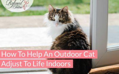 How To Help An Outdoor Cat Adjust to Life Indoors
