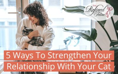 5 Ways To Strengthen Your Relationship With Your Cat