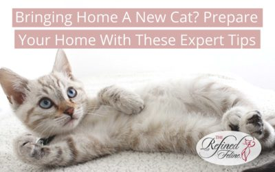 Bringing Home a New Cat? Prepare Your Home With These Expert Tips