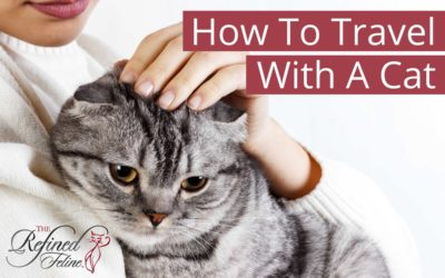 How To Travel With A Cat & Keep It Calm