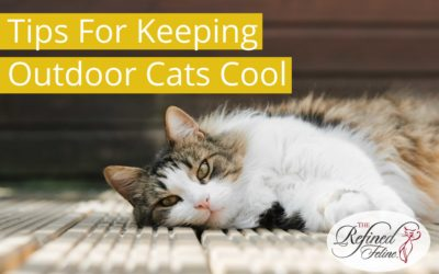 Tips for Keeping Outdoor Cats Cool This Summer