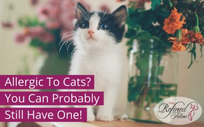 Allergic To Cats? You Can Probably Still Have One!