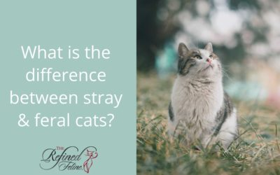 What Is the Difference Between Stray and Feral Cats?