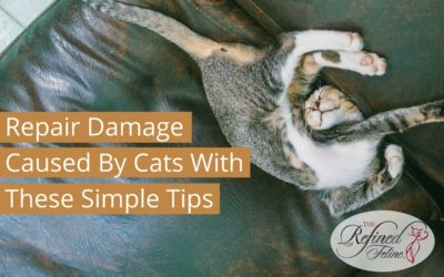 Repair Damage Caused by Cats With These Simple Tips