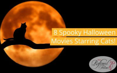 8 Spooky Halloween Movies Starring Cats!