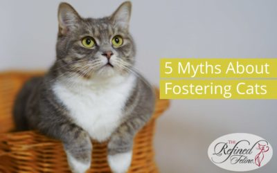 5 Myths About Fostering Cats – Debunked!