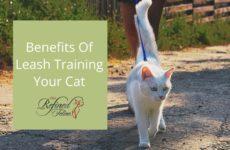 Leash Training Your Cat