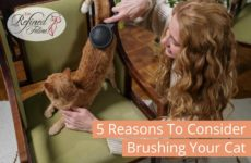 Reasons To Consider Brushing Your Cat