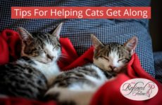 Tips For Helping Cats Get Along